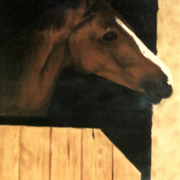 Cheval | Horse